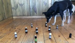 dog-essential-oils-selects