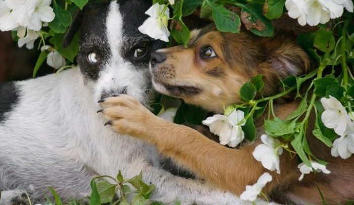 two pups playing in flower shrub