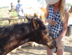 Foal smells green clay with essential oils for wound