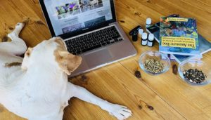 online-course-with-dog